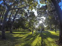 澳洲森林公园