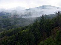 晨雾中山林