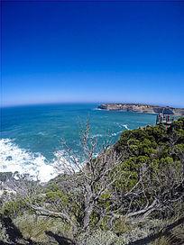 大洋路的大海与热带树木