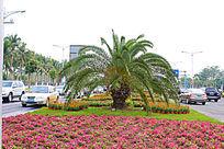 海口国兴大道路边的绿化景观
