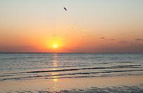 海上日出海鸥飞翔