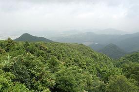 深圳梧桐山山林植被