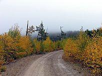 雨中的山林公路