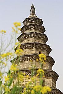 福胜寺塔旁边的油菜花