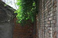 墙头的一抹绿色