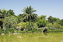 西双版纳热带植物园地理风光