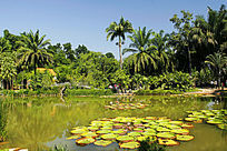 西双版纳热带植物园生态风光