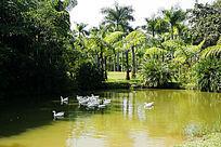 西双版纳热带植物园水塘