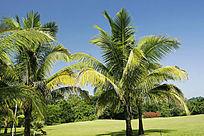 西双版纳热带植物园园景风光