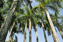 西双版纳植物园树林