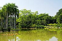 优美的西双版纳热带植物园