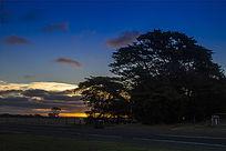 黄昏下的大树美景