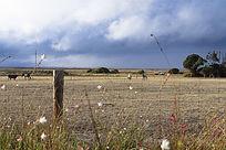 蓝天白云下的袋鼠岛农场风光