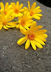 散落的雏菊