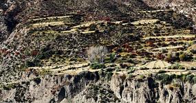 峡谷山石绿色植被