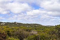 澳洲袋鼠岛灌木林