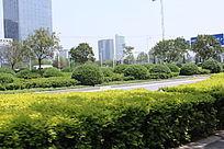 公路两边的植物