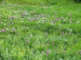 呼伦贝尔草原植被