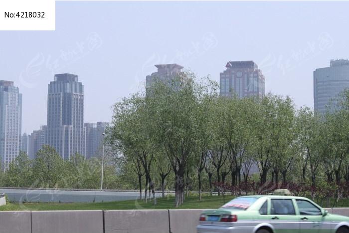 大楼群和树木图片