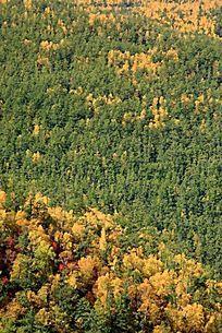 大兴安岭原始森林秋色