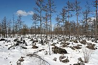 阿尔山石塘林自然景观