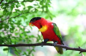 广州动物园鹦鹉