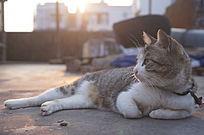 慵懒田园猫