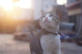午后田园猫