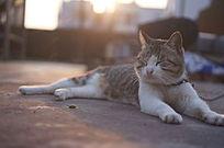 销魂田园猫