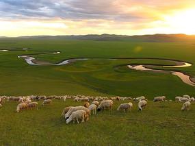 河畔草原上羊群在吃草