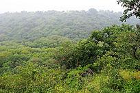 大青沟风景区森林风光