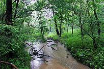 大青沟风景区森林小溪