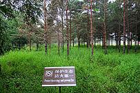 大青沟风景区树林植被