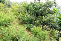 大青沟森林景观