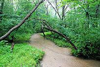 大青沟森林小溪景观