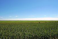 齐齐哈尔扎龙湿地自然景观