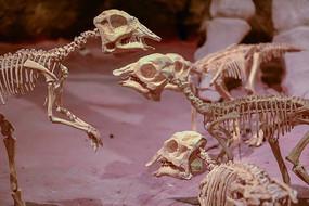 恐龙骨骼化石