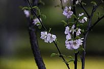 白色花朵绿色叶子