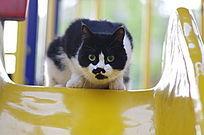 滑梯上的猫