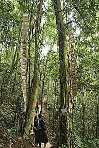 克木人丛林中悬挂民族饰品