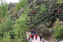 百里杜鹃风景区赏花游人