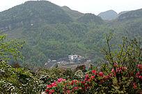 百里杜鹃风景区山林