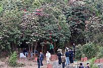 百里杜鹃风景区游客赏花