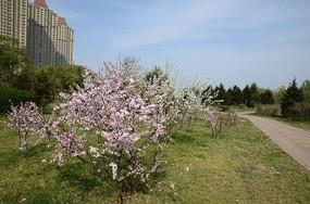 草地上的桃花
