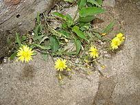 多朵路边的野花