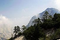华山云雾绕山林