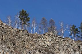山顶岩石上的树木