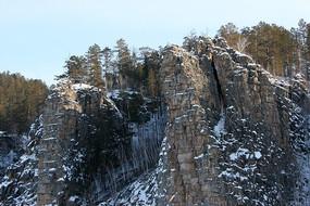 山崖上生长的树木
