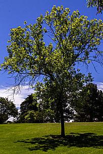 草坪上的一棵树