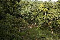 俯视中山公园